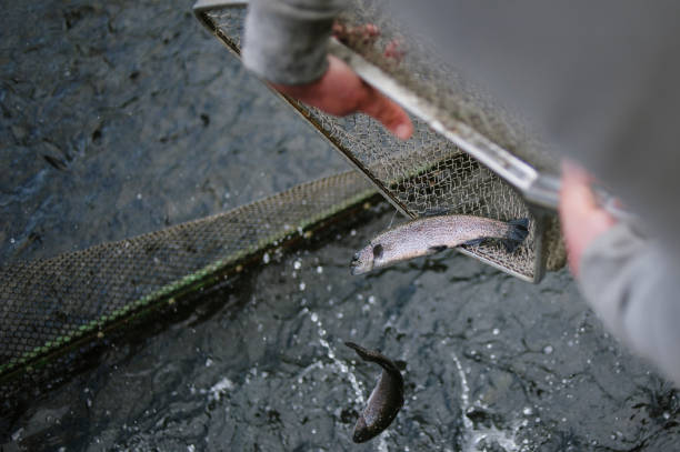 la harina de pescado para animales
