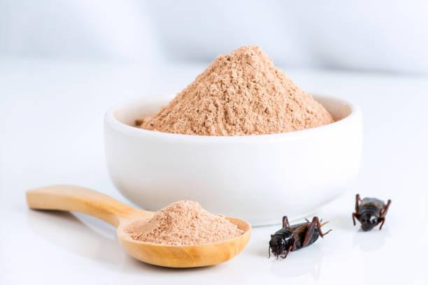 propiedades de la harina de grillo