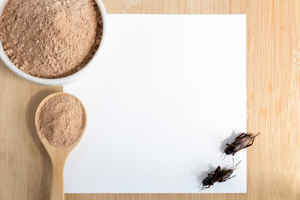 consumir la harina de grillo