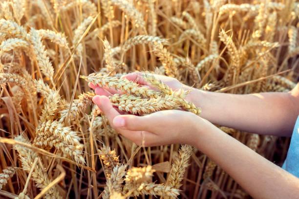 propiedades de la harina de malta