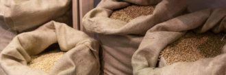 Polilla de la harina