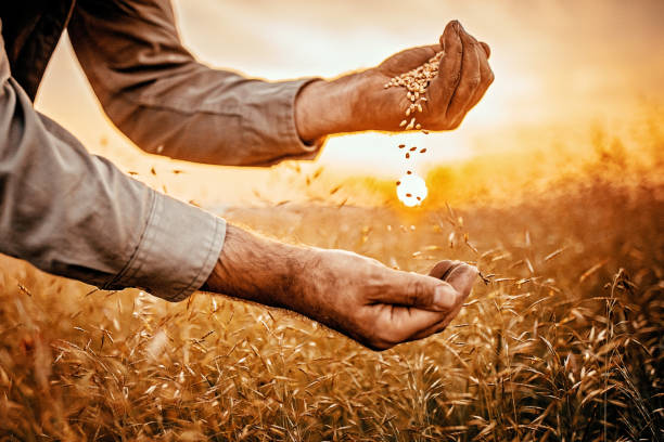 nutrientes de harina tritordeum